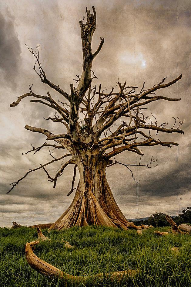 dead-old-tree.jpg