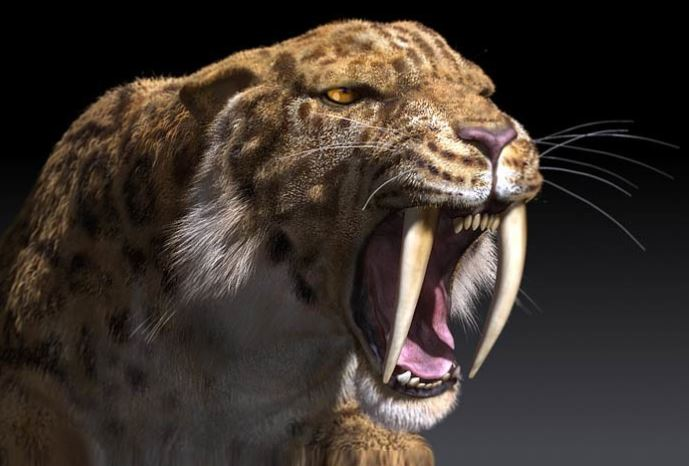 Sabre_tooth_tiger.JPG