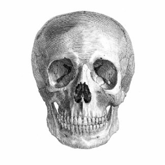 human_skull_anatomy_sketch_drawing_photo_sculpture_magnet-r94f3b8eea545441ebde24fd4fcb13ec3_x7sai_8byvr_324.jpg