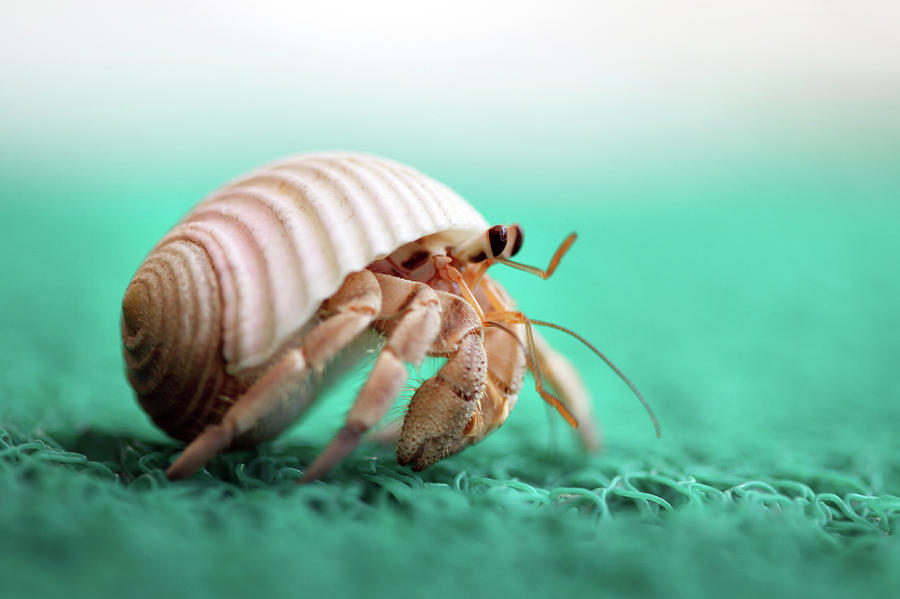 hermit-crab-running-with-love-of-photography.jpg