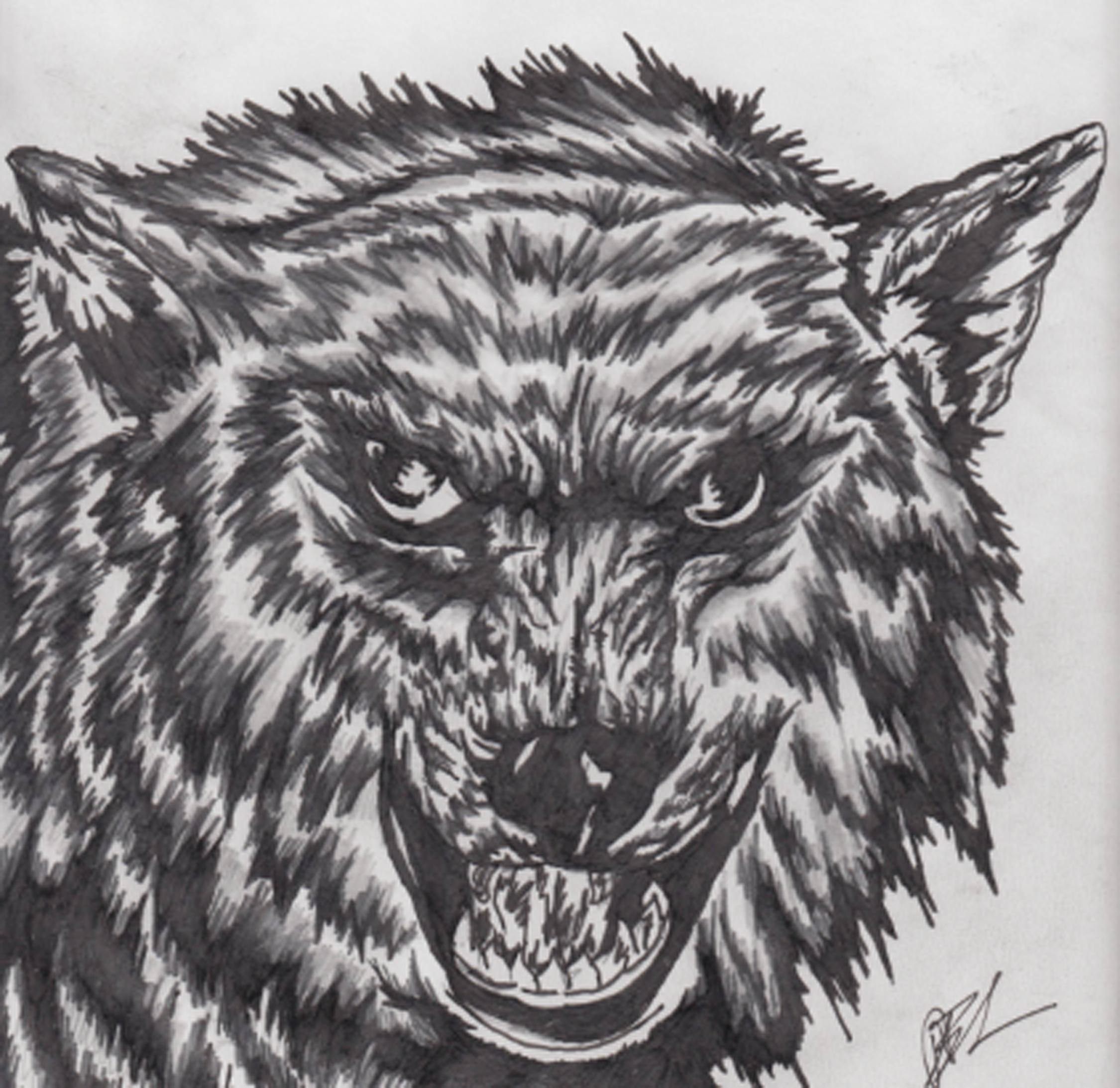 angry_wolf_by_lan23dan-d5e0yrt.png