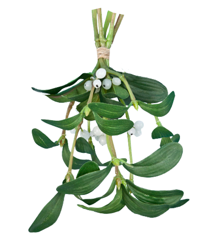 mistletoe-transparent-background.png