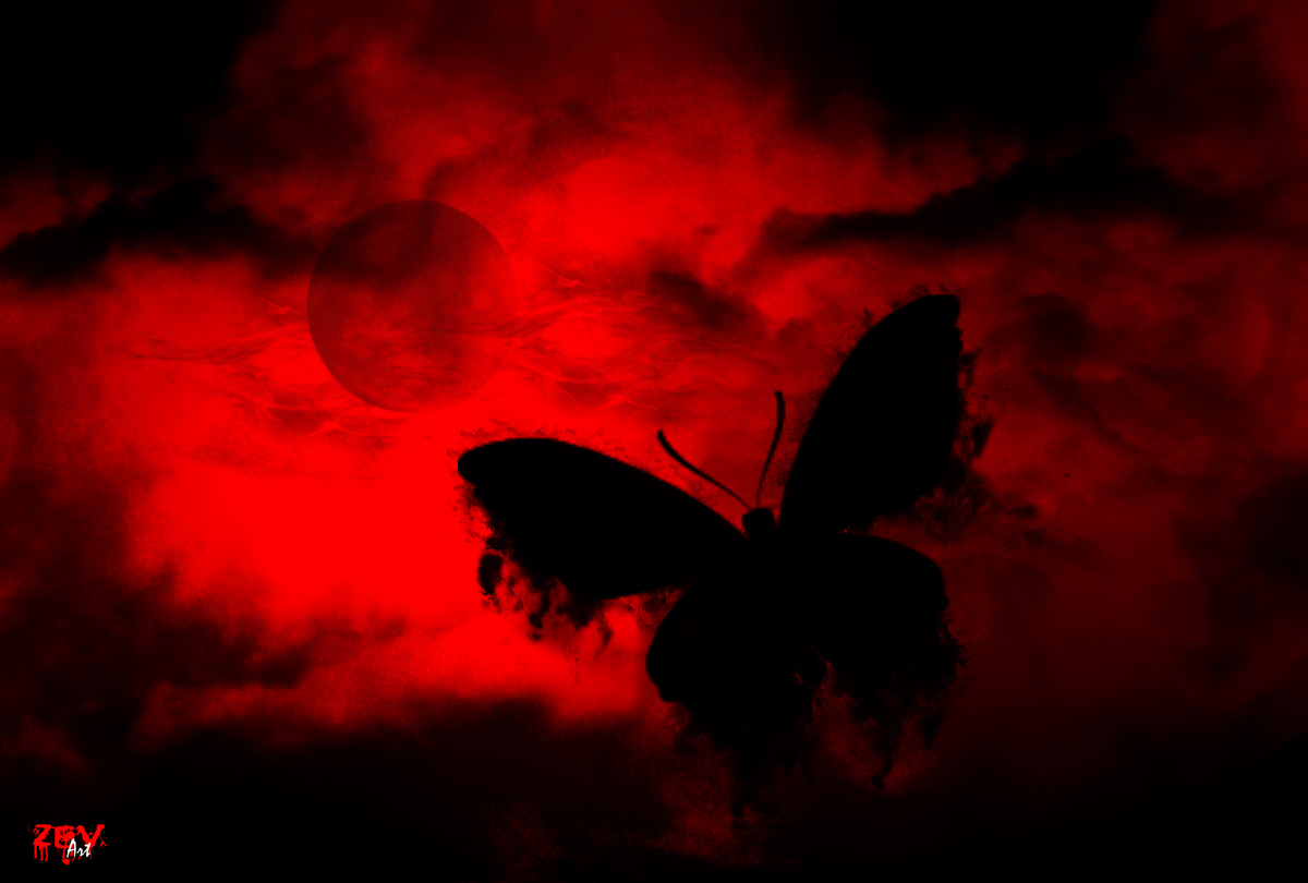 Black butterfly flying at the red sky night