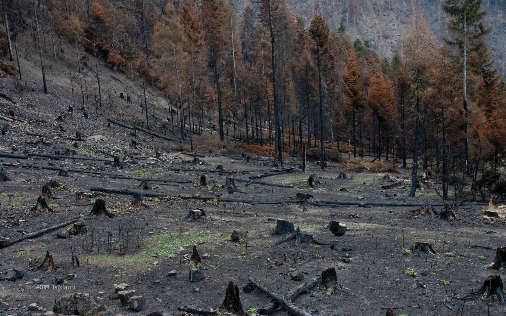burned_forest_of_borjomi_1680x1050.jpg