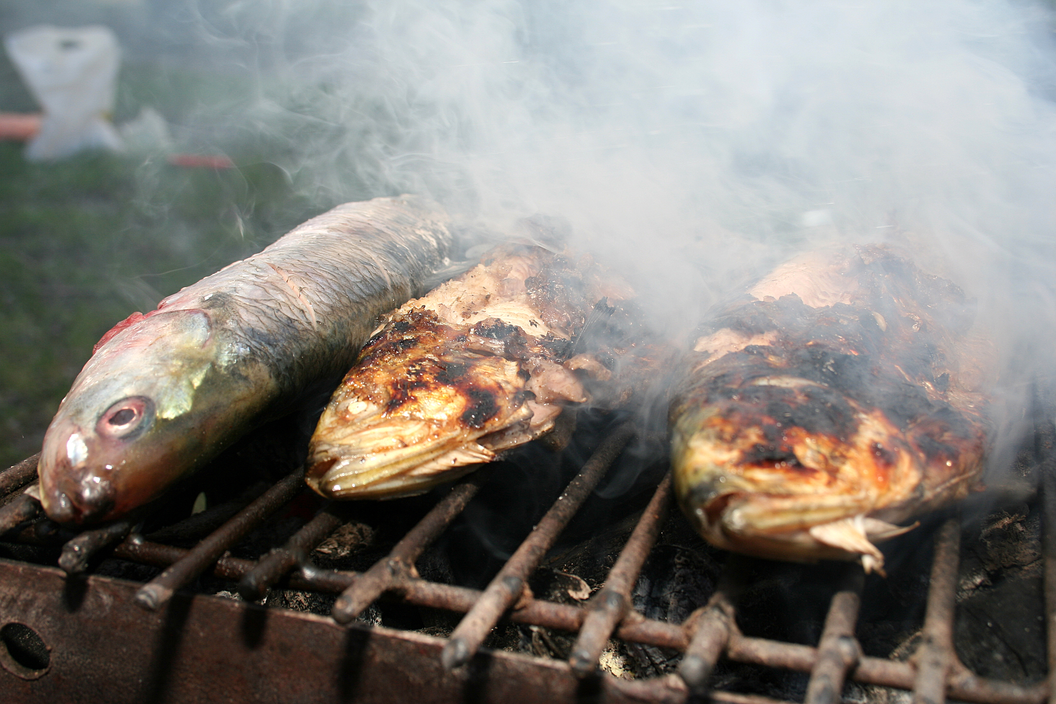 burnt-fish.jpg