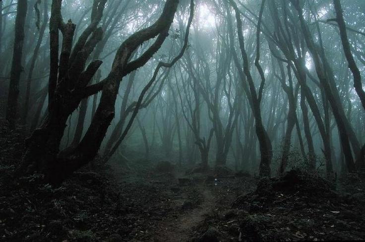 spooky_woods.jpg
