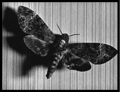 Moth_2.jpeg