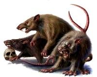 Giant_rats.jpg