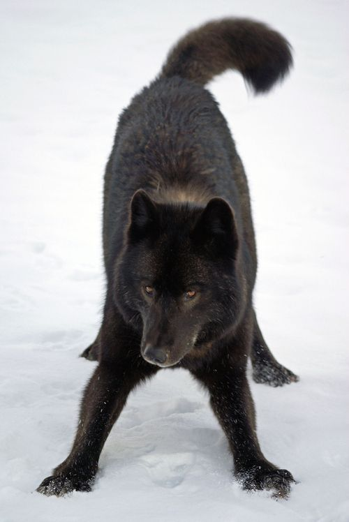 kimwolf.jpg