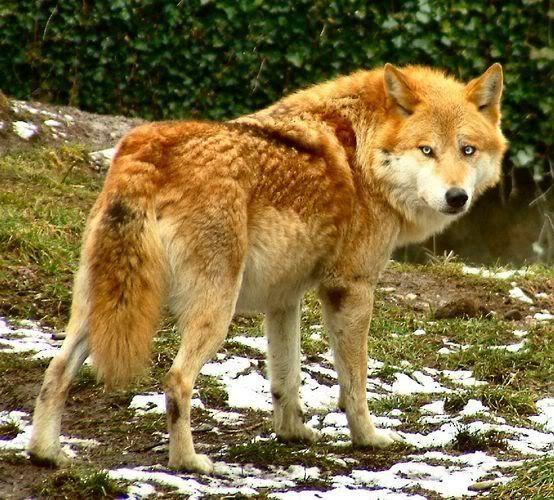marionwolf.jpg