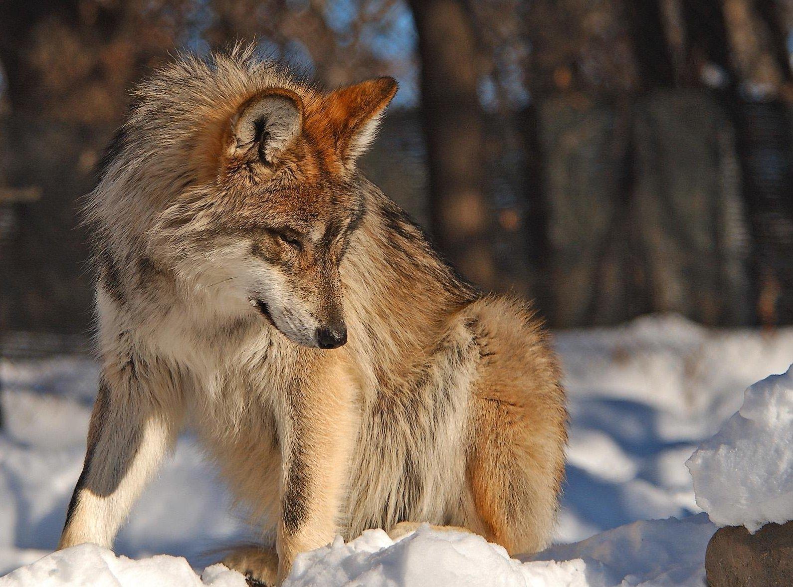 flisswolf.jpg