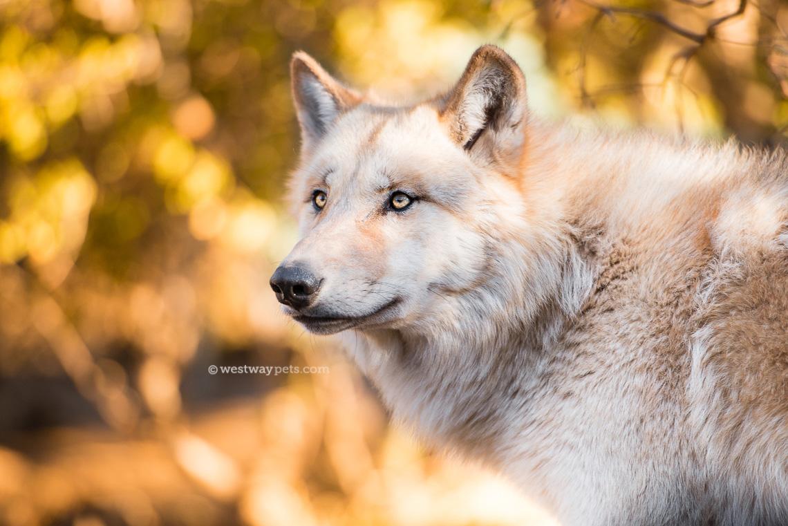 annettewolf.jpg