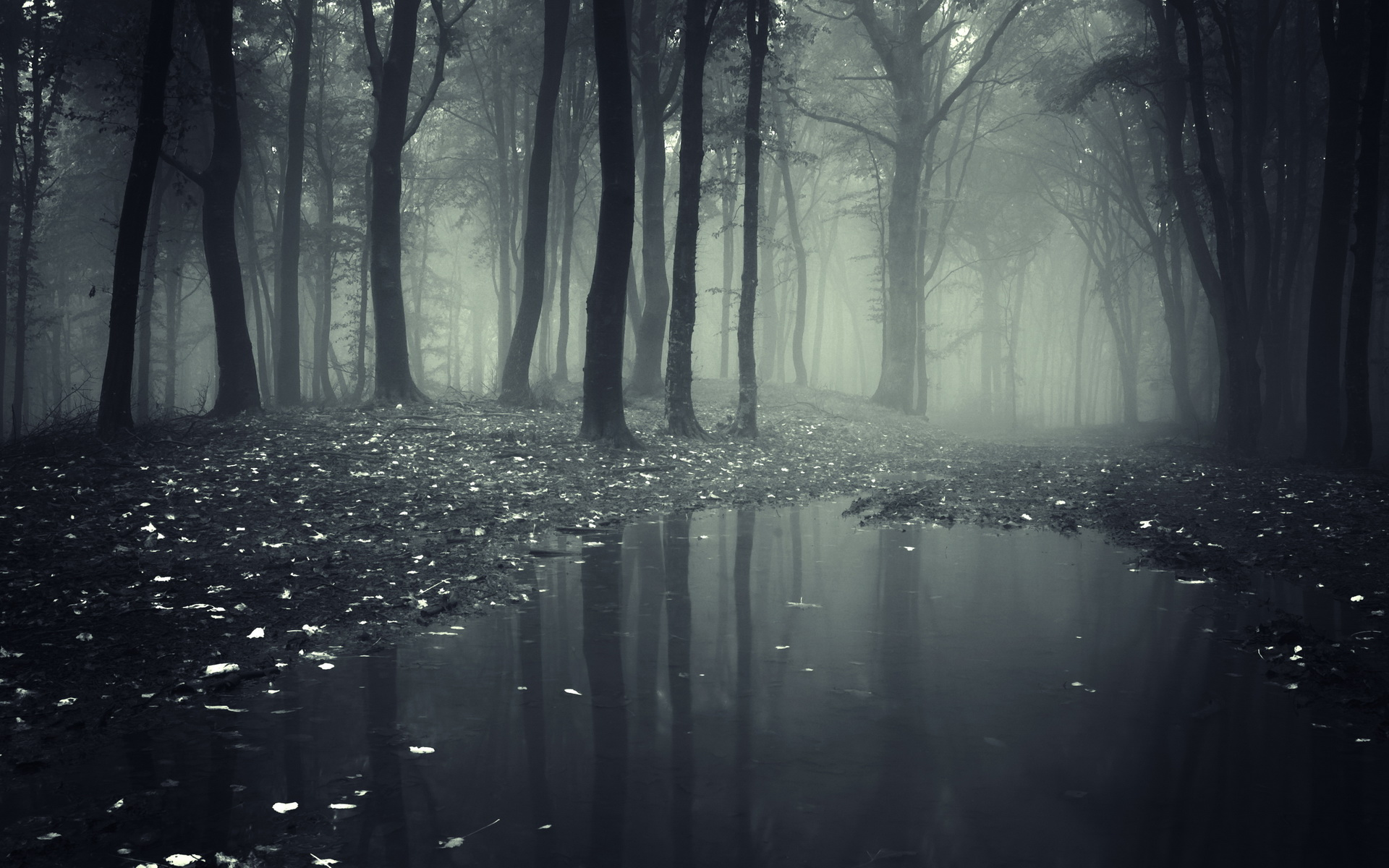jezioro_lesne.jpg