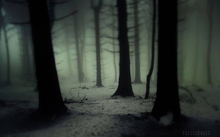 spooky_winter_wood.jpg
