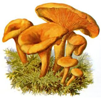 hachae_mushrooms.jpg