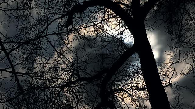 Gulthias_Tree.jpg