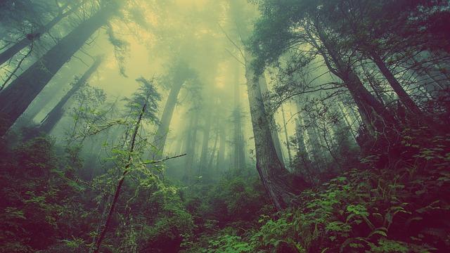 forest-931706_640.jpg