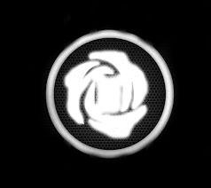 white_rose.jpg