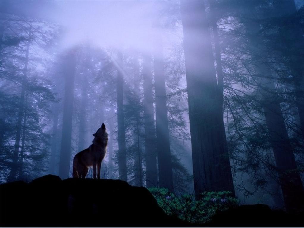 Dark forest wolf 2
