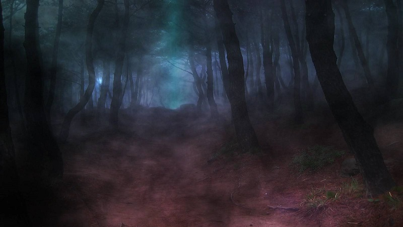 dark-wood-forest-path-wallpaper.jpg
