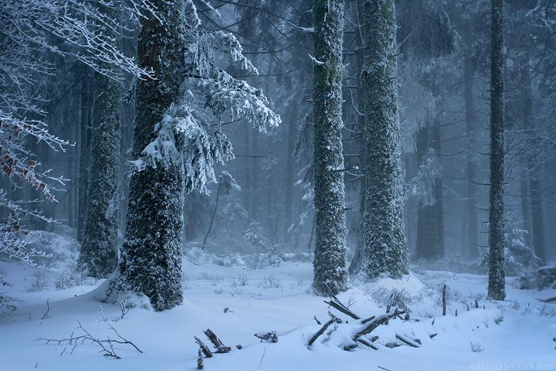 Frost_leaf.jpg
