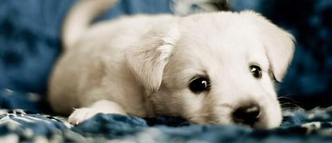 puppy_res.jpg
