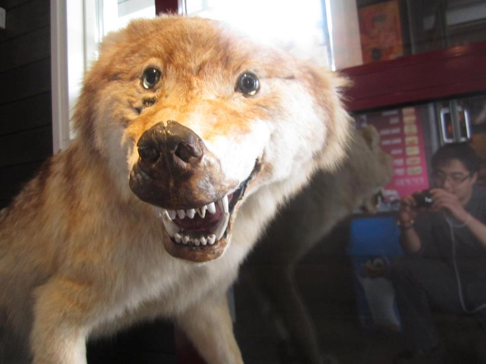 bad-taxidermy-wolf.jpg