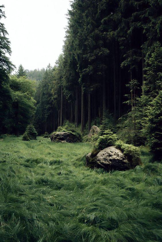 Forest_Edge.jpg