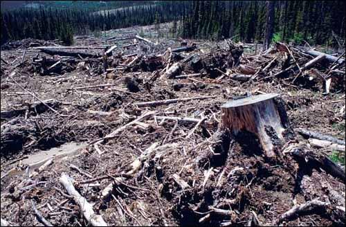destroyed_forest.jpg