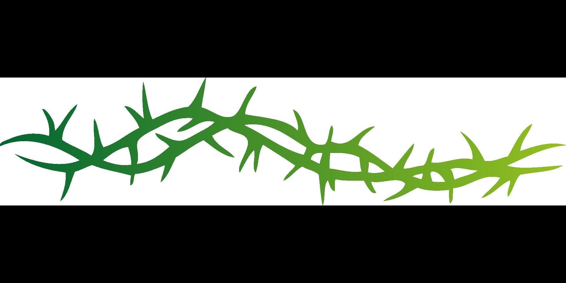 Thorns 149735