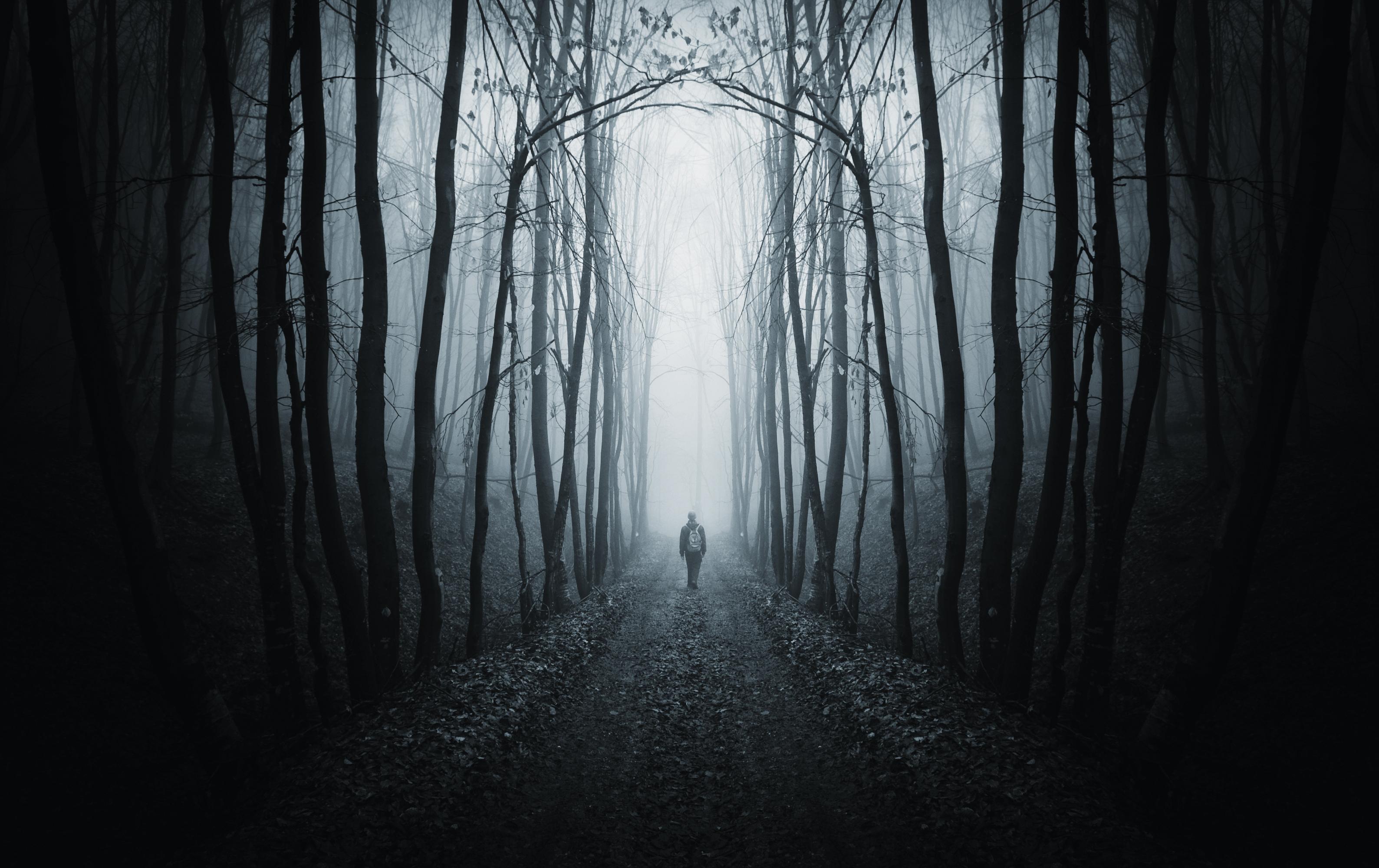 Boy forest