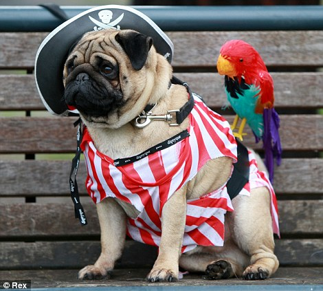 CAPTAINPUG.jpg