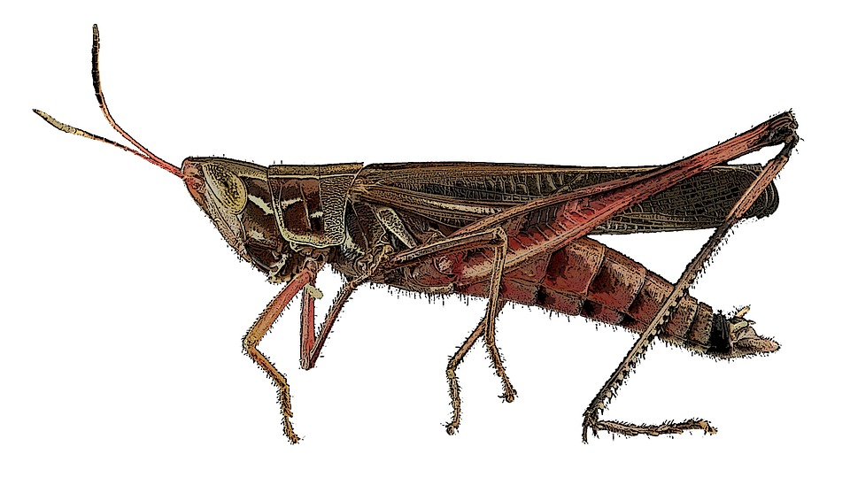insect-1407203_960_720.jpg