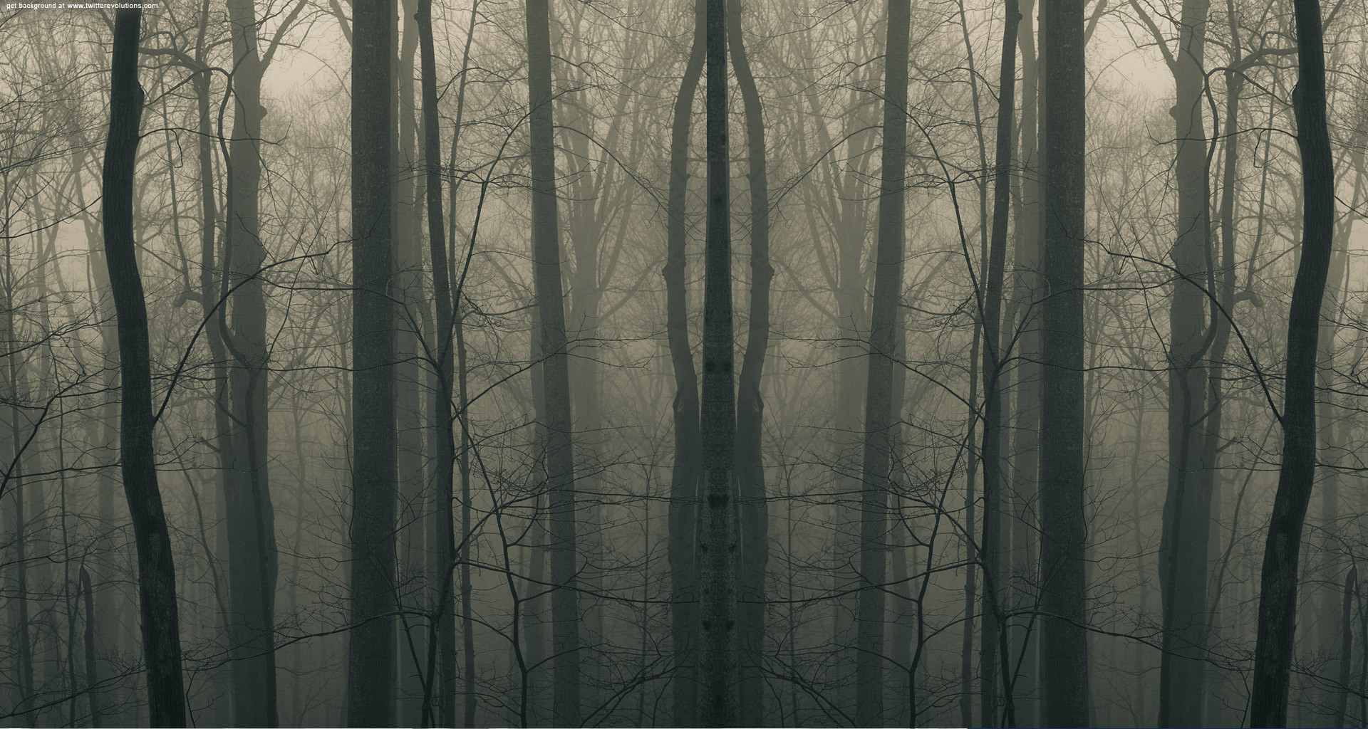 Creepy woods3