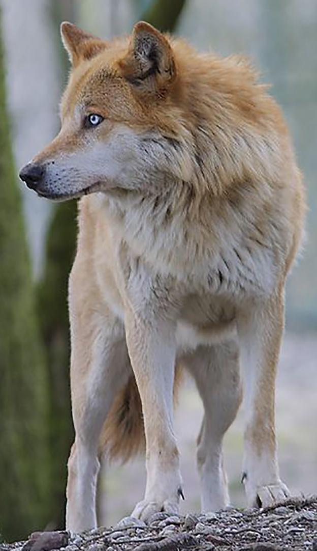 Wolf_4.jpg