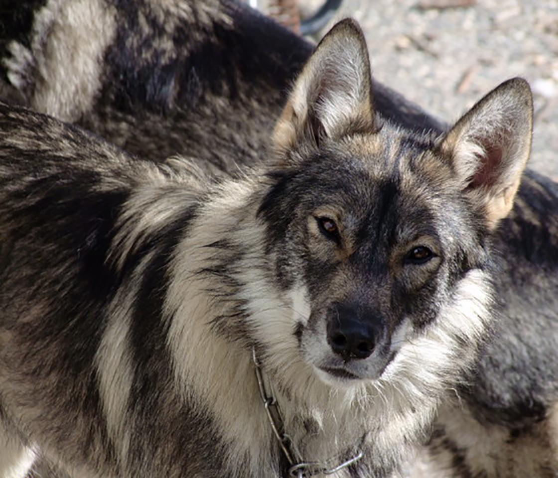 Wolf_5.jpg