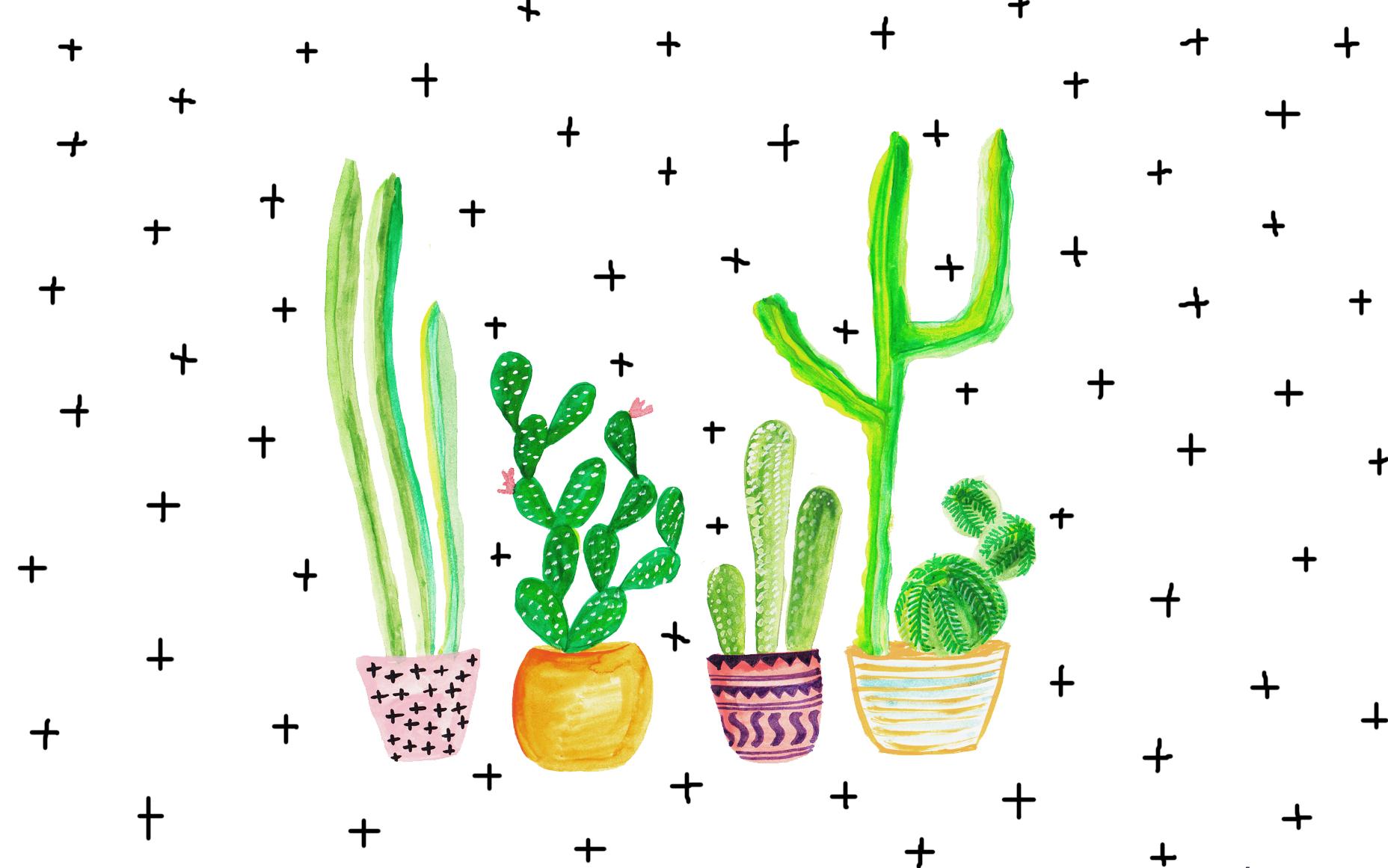 3835515 cactus wallpapers