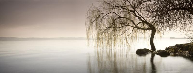 lake_of_the_singing_willows.jpg