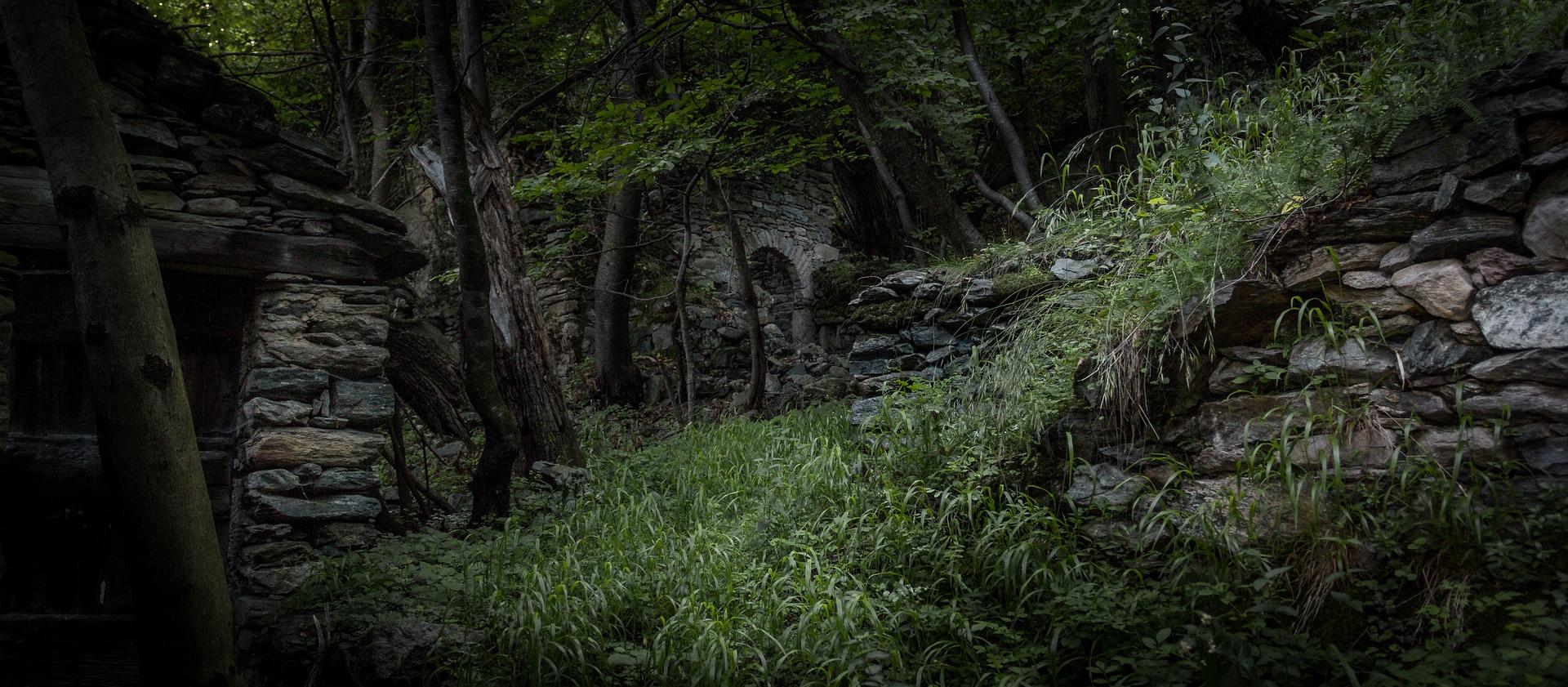 Jungle 2292850 1920
