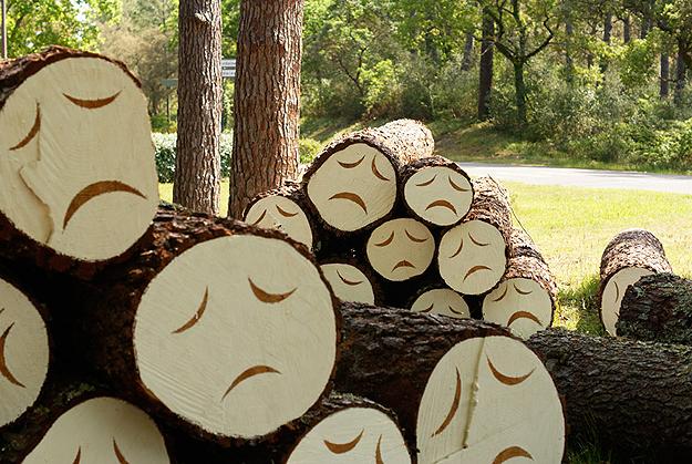 poor-little-tree-faces-2.jpg