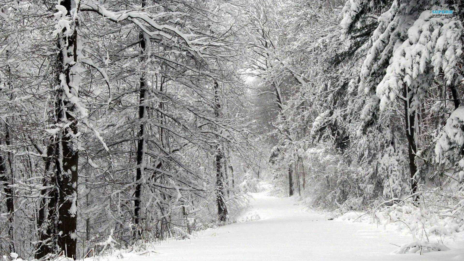 001_-_Wintery_Forest.jpg