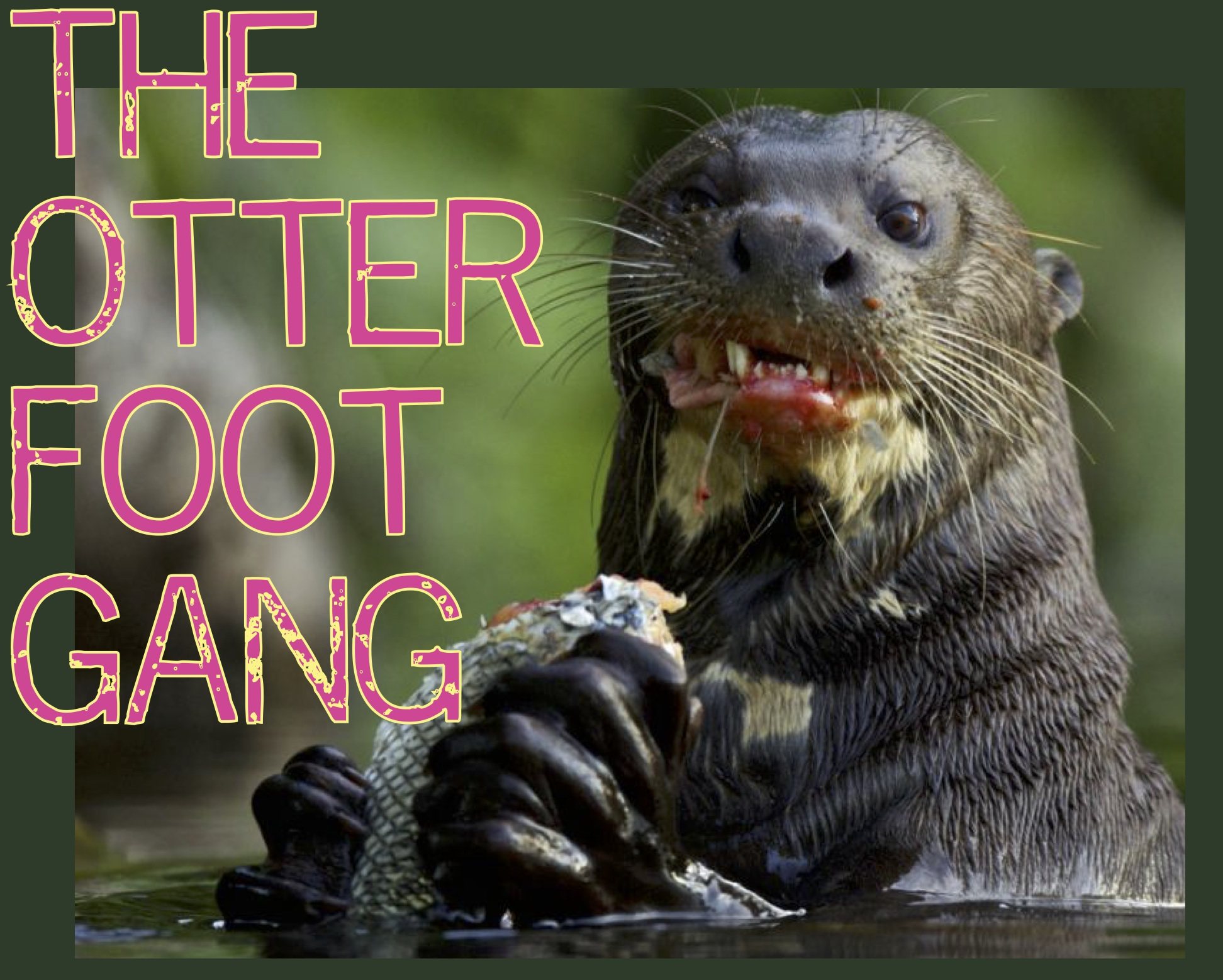 otter_foot_gang.jpg