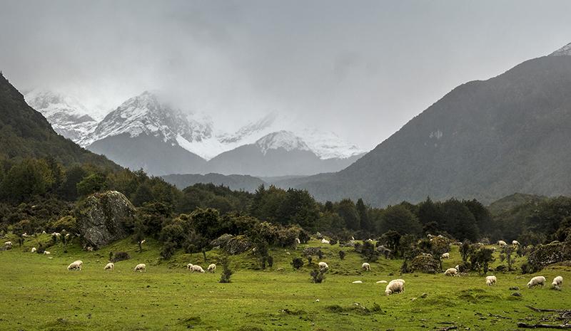 Pastoral_sheep_mountain.jpg