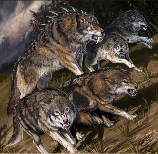 Pf wolves