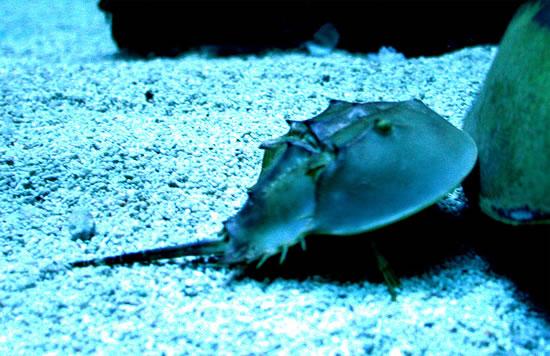 Deepwater_Crabs.jpg
