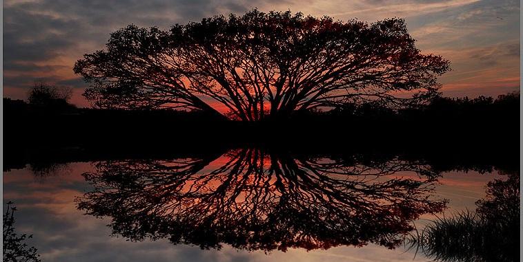Tree o life