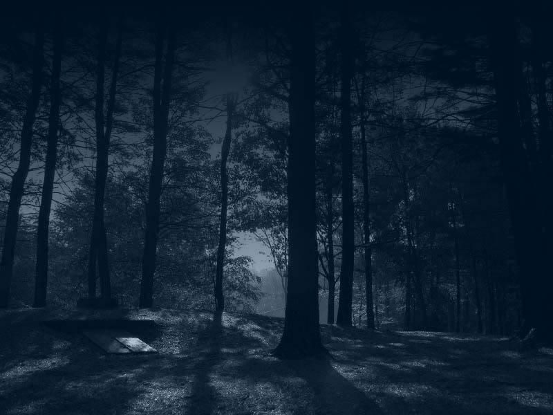 Dark forest by sonnenradbanner