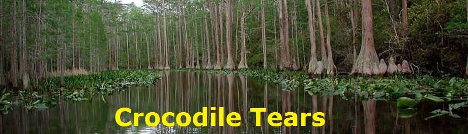 Swamp banner2
