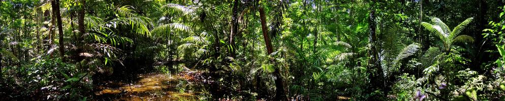 Jungle header