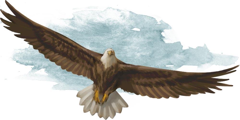 Giant_Eagle.jpg